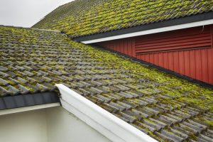 Large patches of moss formation on roof
